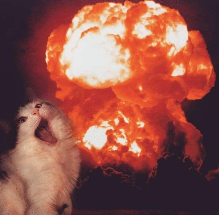 На это невозможно смотреть без улыбки: девушка фотошопит своих котов, превращая их в неведомых зверей