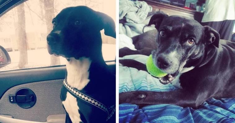 15 сентиментальных фото собак, которые прозябали на улице, но расцвели, когда обрели дом и хозяев