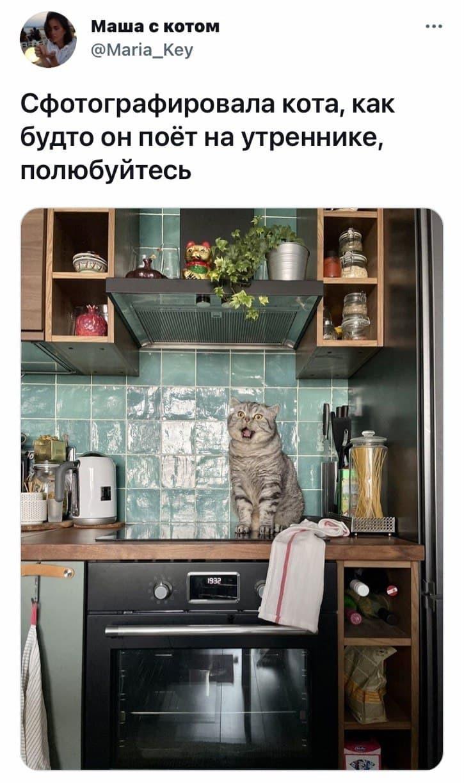 16 фото с котиками, от которых почему-то так трудно оторвать взгляд