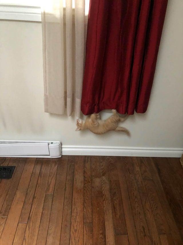 17 примеров, когда домашние кошки не дают людям расслабиться в собственном доме