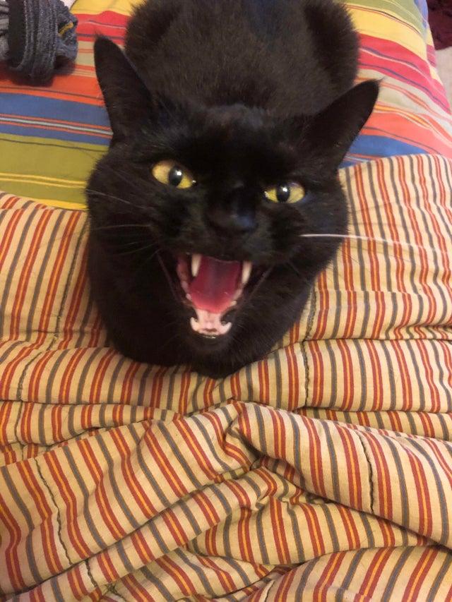 18 котиков, которых не на шутку разозлили и теперь лучше к ним не приближаться