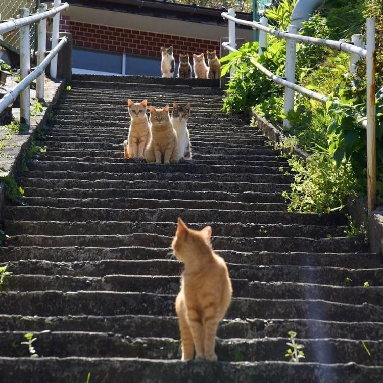 19 фото, которые покажут, что будет, если у вас дома будут жить много-много котиков