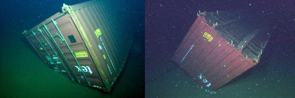 19 снимков из морской пучины, как проверка ваших нервов на прочность