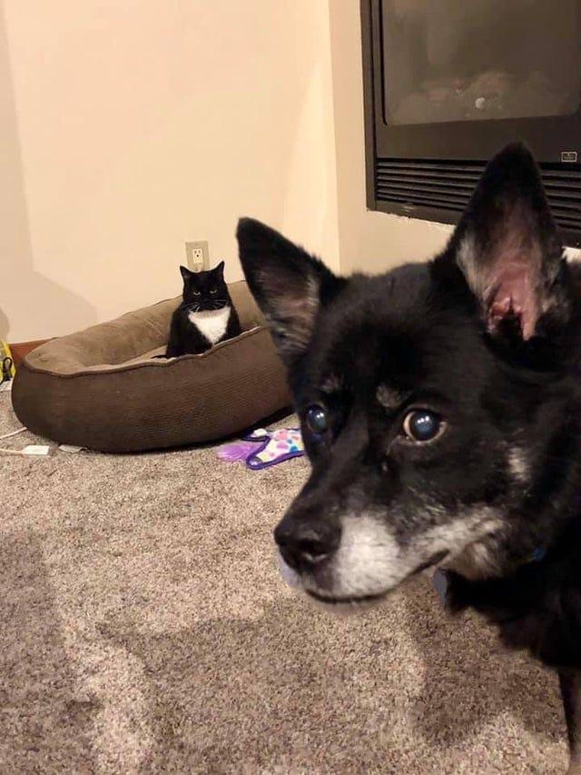 20 дерзких котов, которые без всяких церемоний и компенсаций отобрали у собачек их заветные лежанки