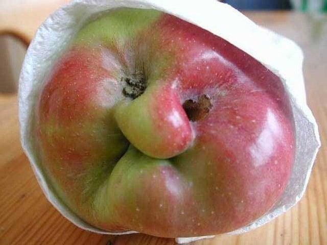 20 овощей и фруктов, которые уродились похожими на что угодно, только не на еду