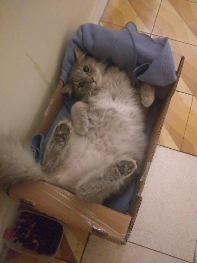20 убедительных доказательств, что если где-то есть бесхозная коробка, в ней непременно заведется кошка