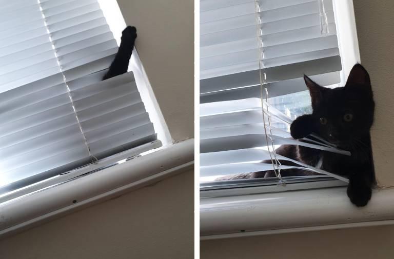 17 примеров вопиющей кошачьей наглости – знают, что нельзя, но все равно лезут!