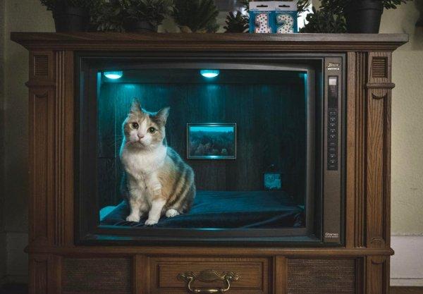 Переделал старый телевизор под спальню для кота и подарил ему на день рождения