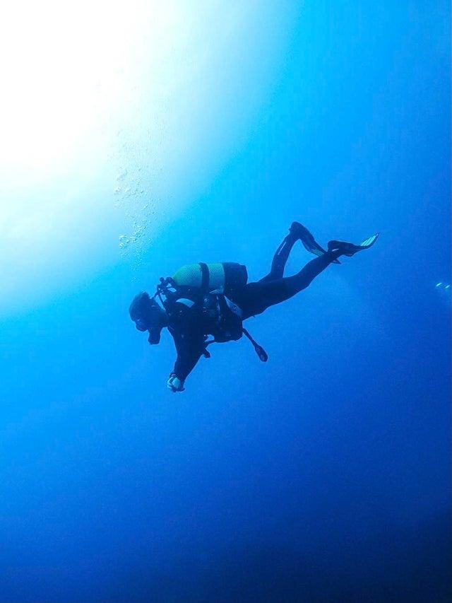 17 чудес из подводного мира, которые покажутся нам пришельцами с других планет