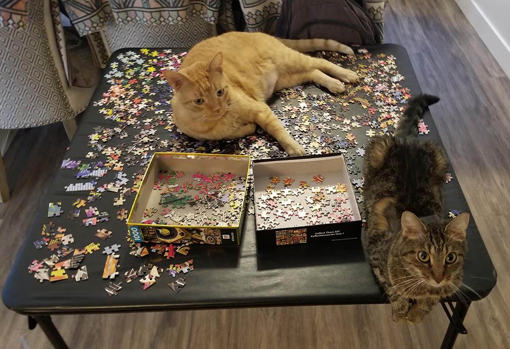 18 фото наглючих котов, чье хобби – попирать личное пространство их хозяев