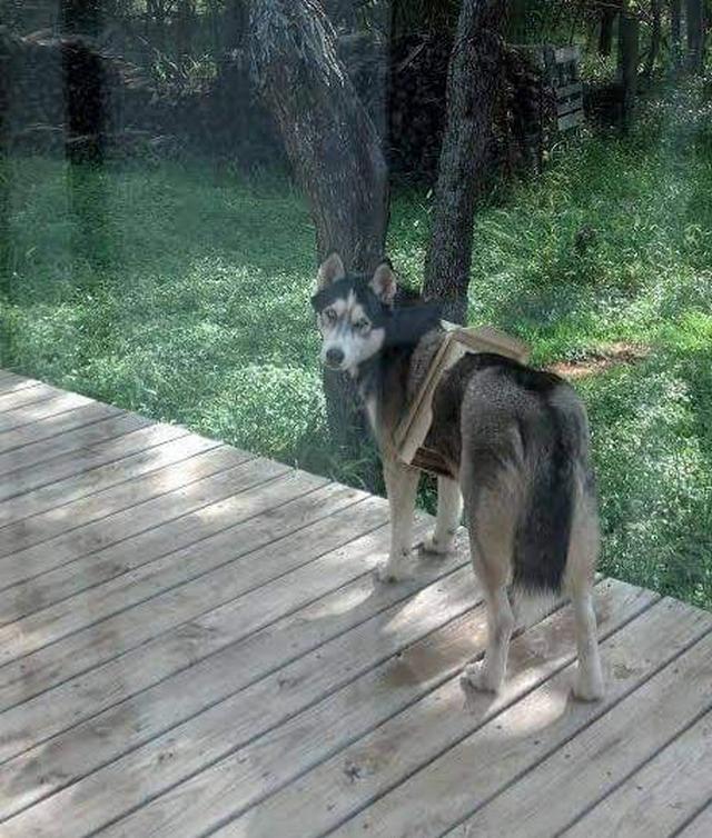 19 доказательств, что собаки никогда не дадут заскучать, ведь с ними всегда что-то происходит