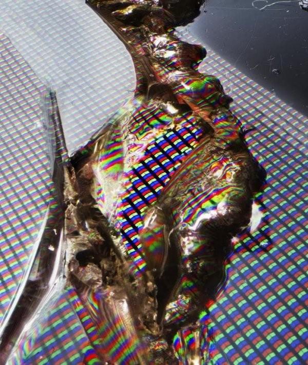 Мир через микроскоп: интересные макрофотографии (16 фото)