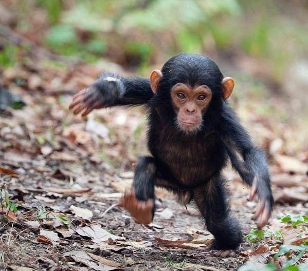 18 доказательств, что все детеныши животных очаровательны, и даже очень