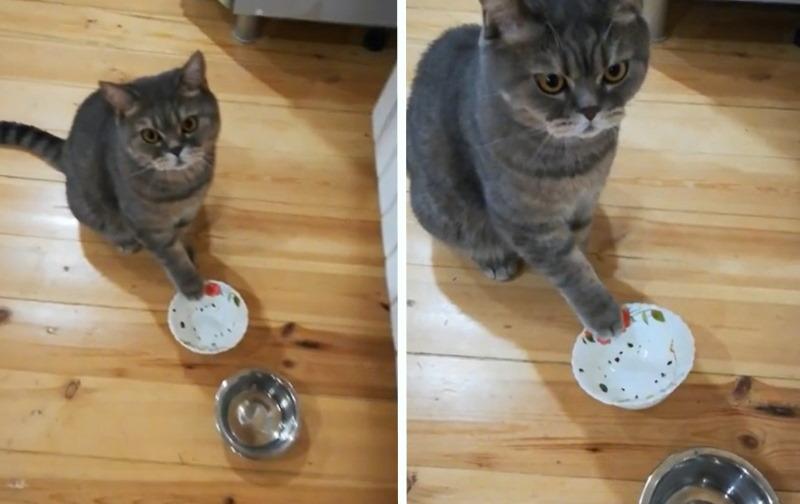 18 наивных людей, которые и понятия не имели о прожорливости кошек, когда их заводили