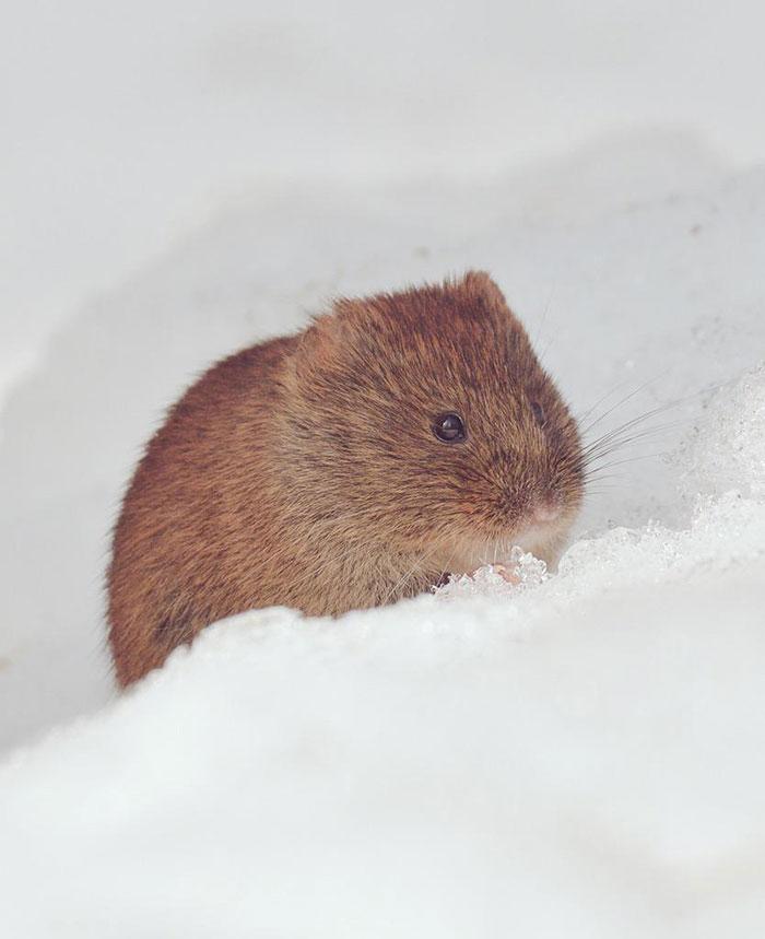 7 самых милых животных с острова Хоккайдо