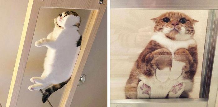 Котячьи лапки