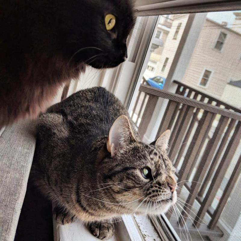 Майя — кошка, которой не повезло с генами, но повезло с хозяевами (30 фото)